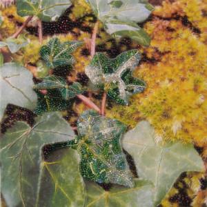 Ivy, Moss