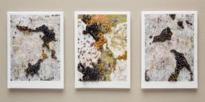 Triptych: Lichen