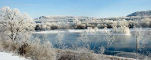 Winter Frost (Photo on Aluminum)