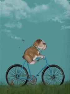 English Bulldog on Bicycle - Sky