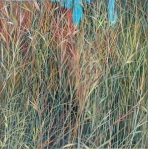 Grasses Series
