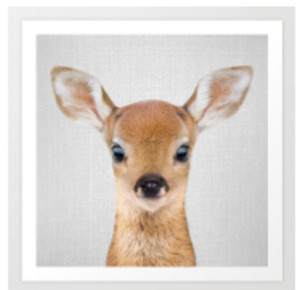 Deer - Baby Animals