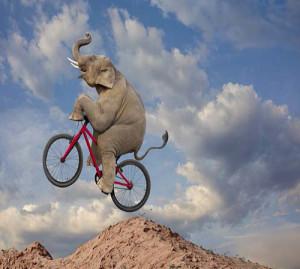 Elephant Mountain Biking