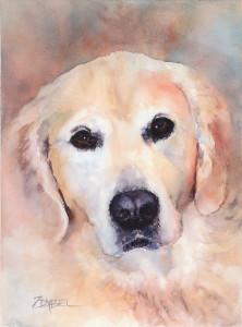 Riley-Golden Retriever