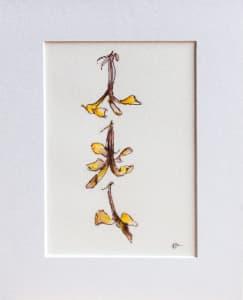Native Frangipani Falling I