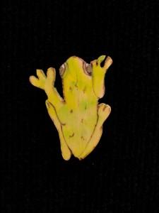 Artist made Tree Frog Brooch