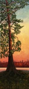 Sunset on Pine