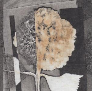 Hydrangea Cross-section