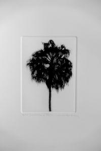 Woollahra Palm