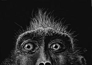 Monkey Surprise