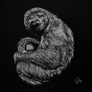 Friendly Sloth