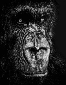 The Wise Simian