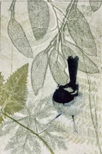 Blue fairy wren amongst the eucalyptus
