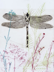 Large Dragonfly in a Spring garden