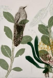 Poised wattlebird and waratah flower