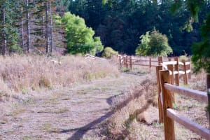 Wood Fence Guiding Path