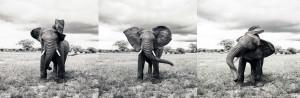 For the Elephants III