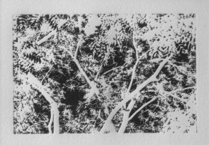 Untitled #287 (Foliage in Black and White)
