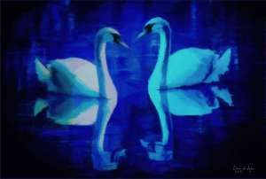 Twilight Dance of the Swans