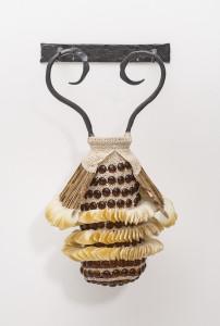 Ampora Coleoptera