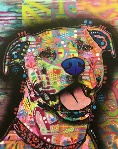 The Captivating Pit Bull