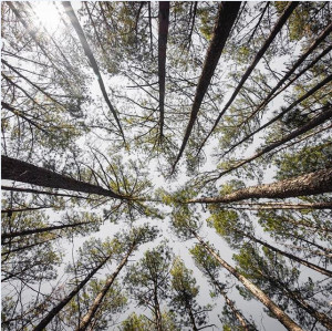 Natural Symmetry - Chattahoochee Nature Forest