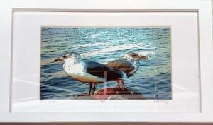 Two Gulls Framed