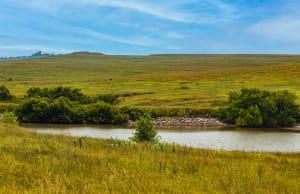 Tallgrass Prairie, Afternoon #2