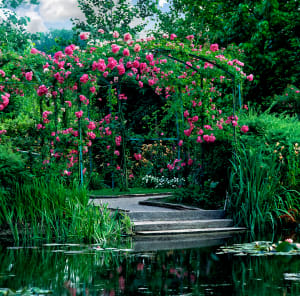 Giverny Roses by the Lily Pond