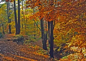 秋天的颜色2