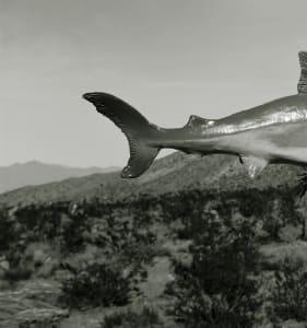 Unidentified Species, Shark: Nevada Desert
