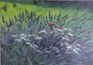 Free Range Lavender