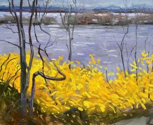 Forsythia In Bloom, River In Flood