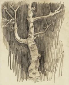 Fig Tree II