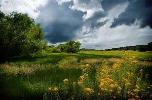 Cienega Wetlands, Canelo