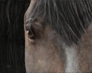 Tanama (Spanish Mustang)