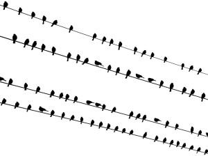 Birds on Wires near Agua Caliente Park