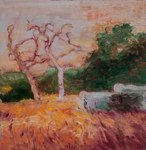 Sycamore Trees on La Crescenta Park Trail