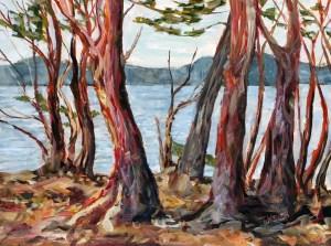 Arbutus Tree Morning St John's Point study