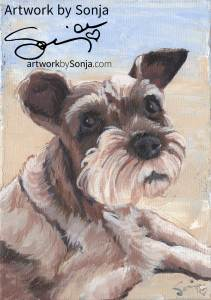 Miniature Schnauzer Pet Portrait