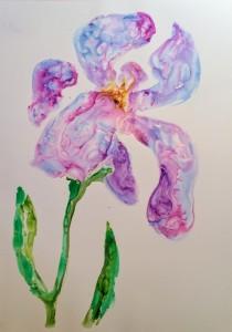 Big Iris