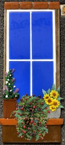 Window Garden 2