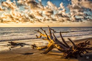 Driftwood Beach at Jekyll Island