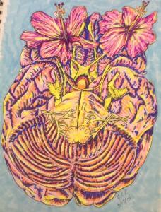 Brain growing hibiscus