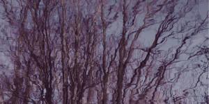 Red Violet Trees Variation