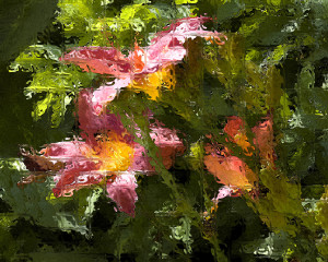 Rose Daylilies 1A
