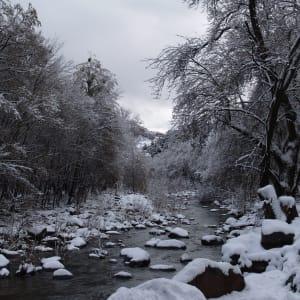 Winter's Calm by Mei-Ying Jue