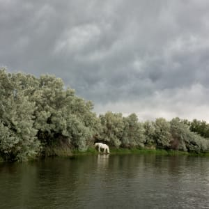 White Horse by Todd W. Trask, MD