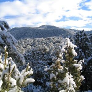 Winter by Robert G. Grossman, MD