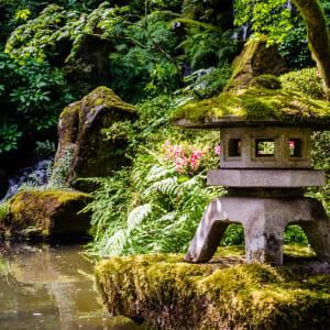 Zen Pond by David Joseph, MD
